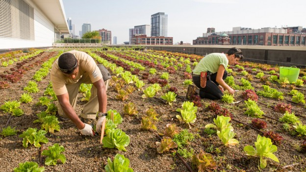 dak groenten tuin in de stad
