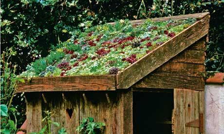tuinhuis sedum dak