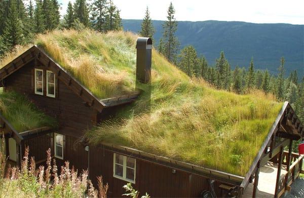 turfdak-noorwegen-grasdak-groendak