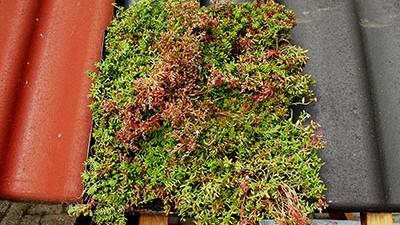 groendakpan detail bovenaanzicht groendak