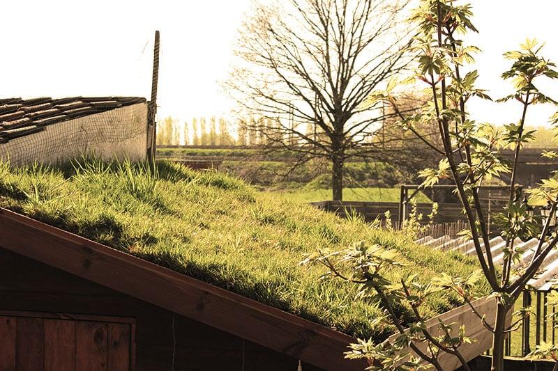 trufdak-dakturf-op-tuinhuis-vervolg-groendak-groene-daken-epdm