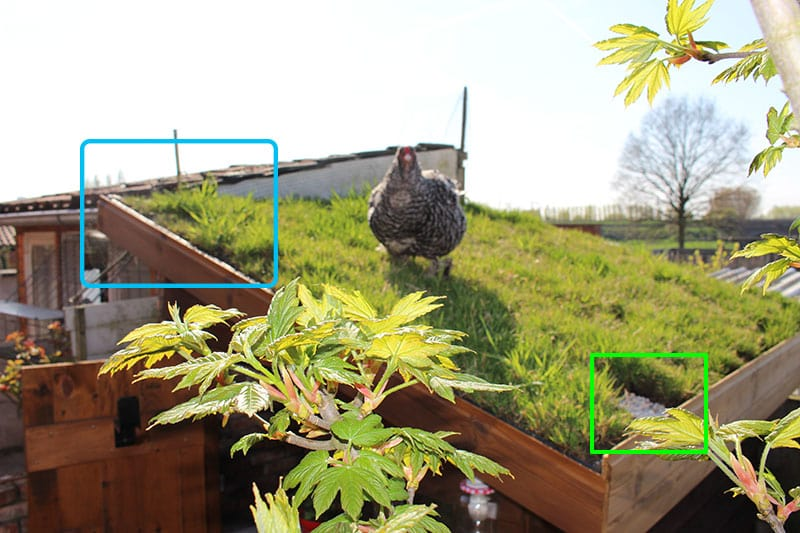 trufdak-dakturf-op-tuinhuis-vervolg-groendak-groene-daken